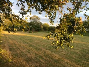 Lawn sunshine